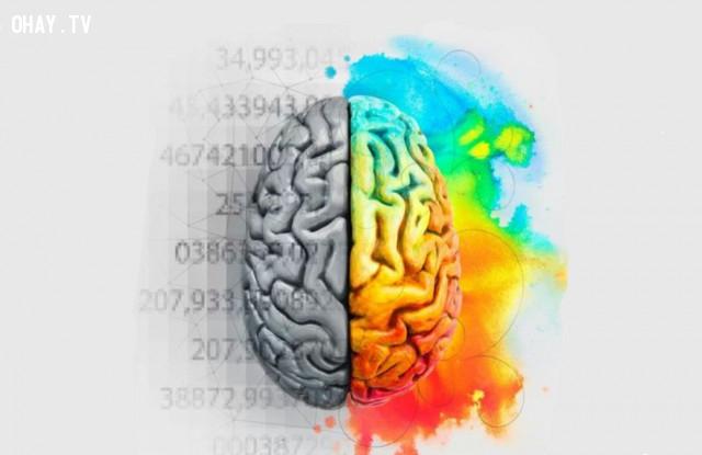 ,não bộ,cơ thể con người