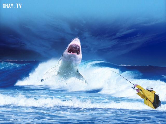 Đụng Độ Cá Mập,kỹ năng sinh tồn