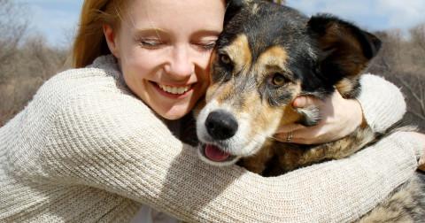 10 loài chó trung thành nhất thế giới