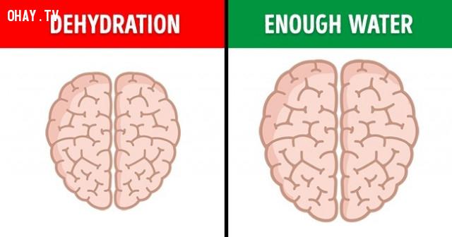 6. Não rất nhạy cảm với sự mất nước,não bộ,cơ thể con người