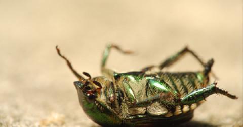 Chuyện gì sẽ xảy ra nếu côn trùng biến mất khỏi trái đất?