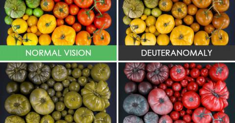 Màu sắc của thế giới qua cách nhìn của những người mắc hội chứng mù màu