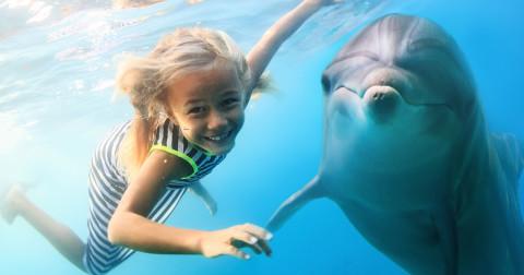 10 điều có thể bạn chưa biết về cá heo