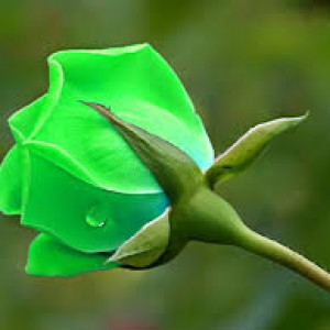 8. Màu xanh lá cây