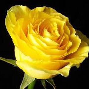 3. Màu vàng