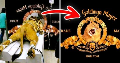 12 sự thật đáng kinh ngạc đằng sau những logo nổi tiếng mà bạn chưa biết