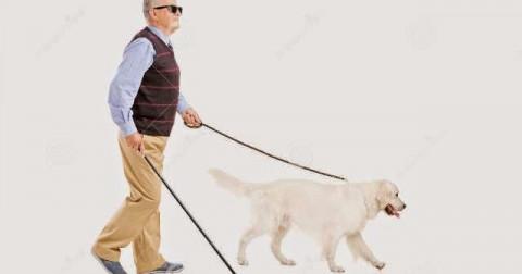 Bài học sâu sắc từ câu chuyện chú chó trung thành và người chủ mù gây xúc động