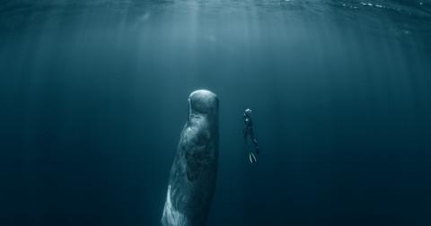 Tại sao cá voi được ngư dân vùng biển lập đền thờ?