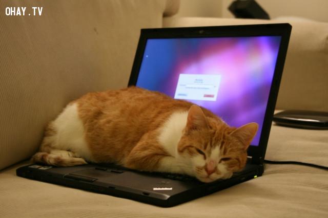 1. Giữ vật nuôi tránh xa máy tính xách tay của bạn,mẹo công nghệ,máy tính xách tay,laptop