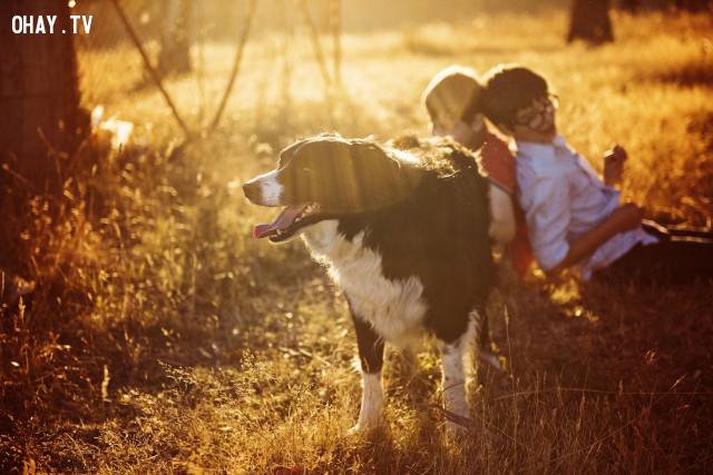 ,danh ngôn tiếng anh,câu nói hay,loài chó