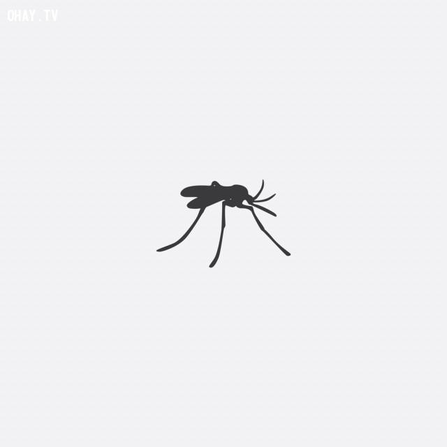 Muỗi thường bay quanh đầu,những điều thú vị trong cuộc sống,loài muỗi