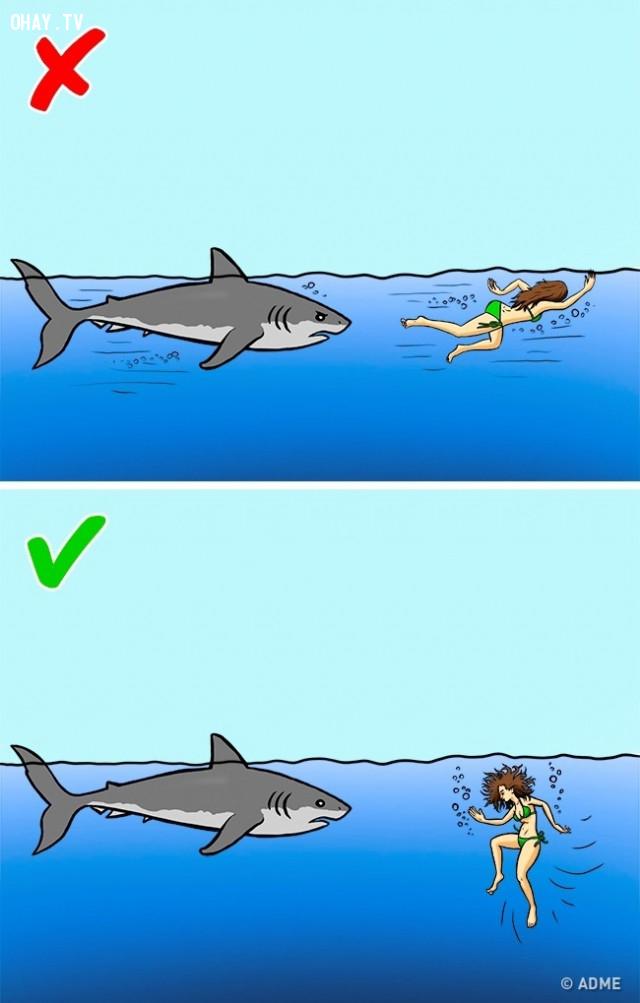 Cá mập,kỹ năng sinh tồn