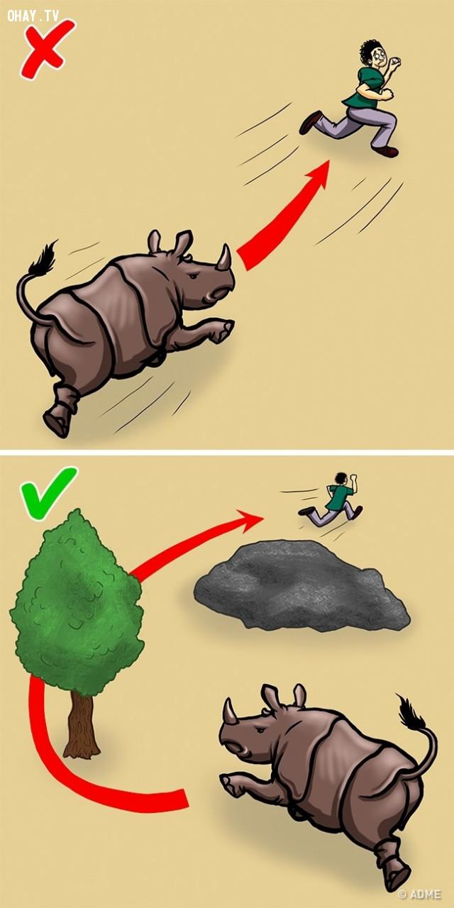 Tê giác,kỹ năng sinh tồn