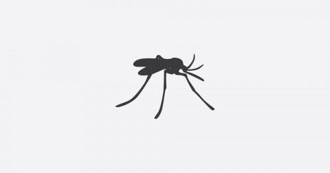 10 điều thú vị về muỗi có thể bạn chưa biết