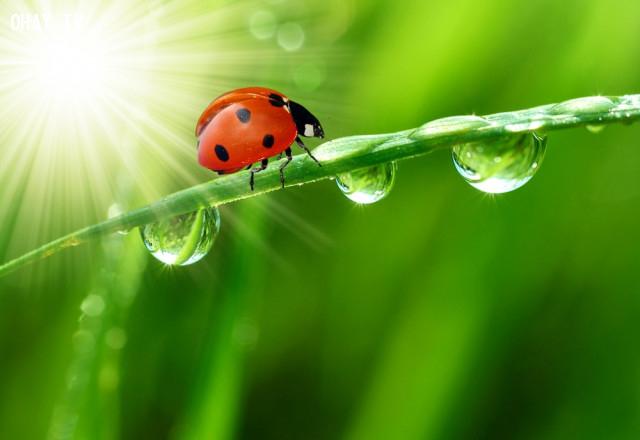 Phát hiện những loài vật mang vận may trong vườn,điềm báo,dấu hiệu gặp may,tâm linh