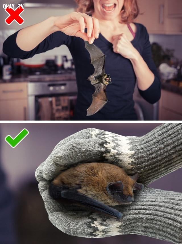 5. Khi một con dơi đột nhiên xuất hiện trong nhà bạn,