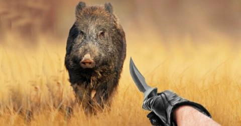Những cách xử trí bạn phải nằm lòng khi đụng độ động vật hoang dã