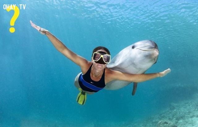 8. Nếu một con cá heo bơi gần bạn,