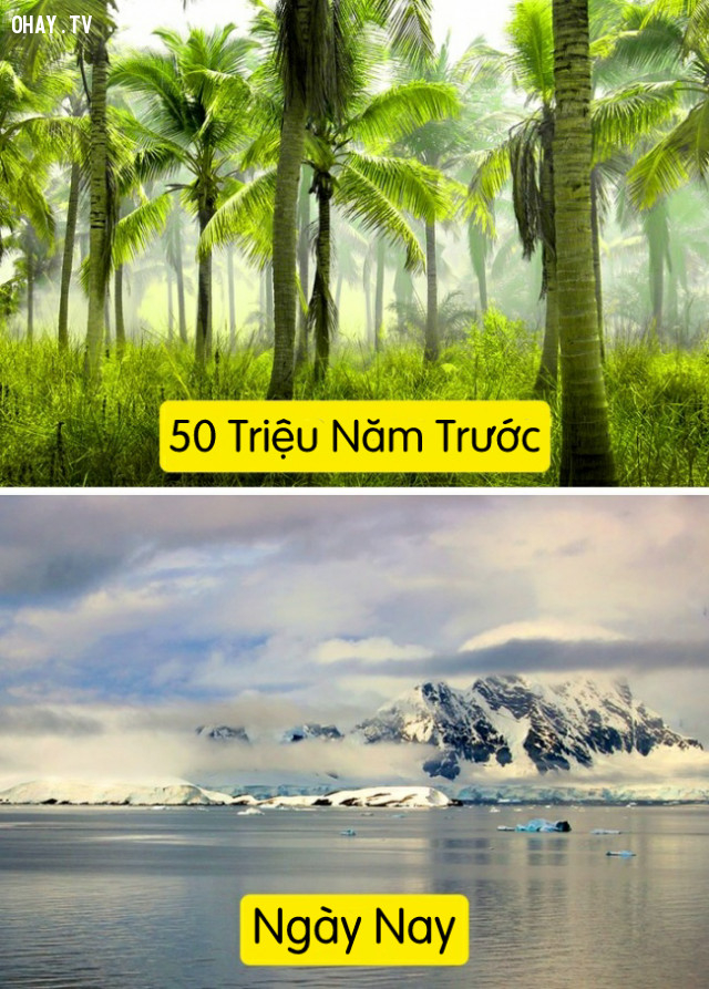 2. Nam Cực đã từng là một thiên đường nhiệt đới,