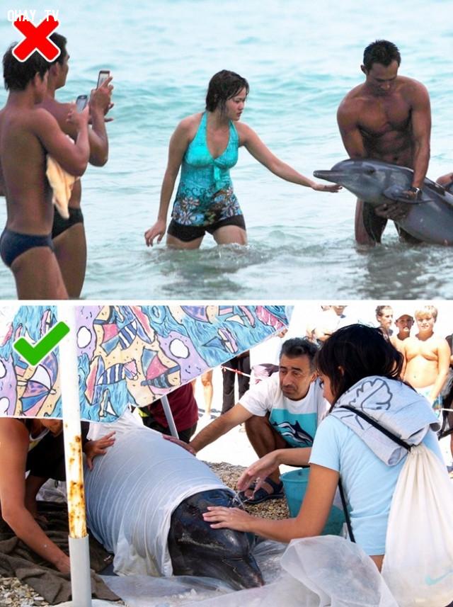 9. Nếu bạn phát hiện cá heo bị trôi dạt vào bờ,