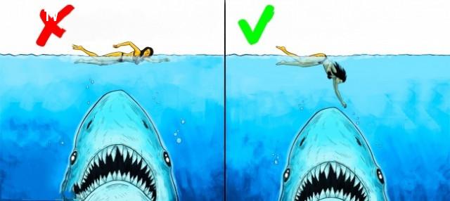 10. Khi bạn gặp một con cá mập,