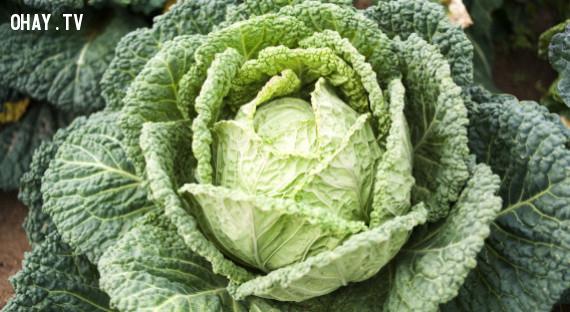 """4.Ở một số thị trấn tại Mỹ,Halloween được gọi là """"Cabbage Night"""".,"""
