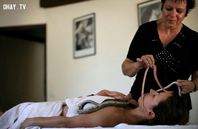 Massage bằng rắn,phương pháp làm đẹp,những điều thú vị trong cuộc sống,massage bằng lửa,massage bằng rắn