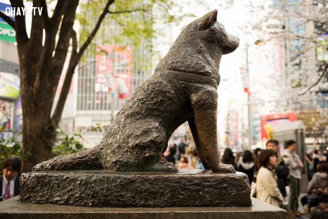 Chú chó Hachiko trung thành,sự giao tiếp của động vật,ngôn ngữ động vật,vẹt xám châu phi,tê giác sudan,chú chó hachiko,chim cánh cụt grape