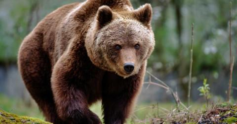 Kỹ năng sinh tồn: cách thoát khỏi những động vật hoang dã nguy hiểm