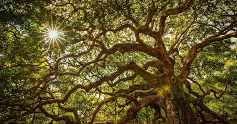 Chiêm ngưỡng vẻ đẹp có 1-0-2 của 10 khu rừng bí ẩn nhất trên thế giới