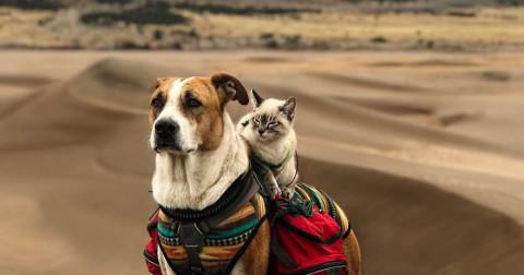 Cùng ngắm bộ ảnh siêu đáng yêu  'Khi chó mèo đi du lịch cùng nhau'
