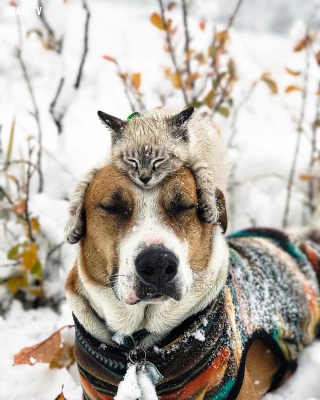 ,ảnh chó mèo,động vật dễ thương