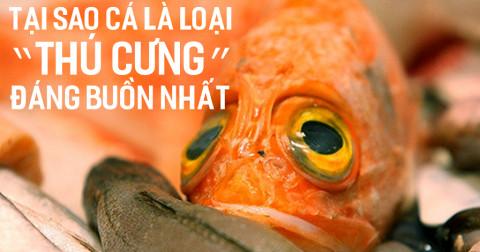 Tại sao cá là loại 'thú cưng' đáng buồn nhất