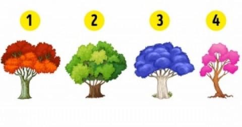 Bạn thích cây nào nhất? Điều đó sẽ nói lên những thay đổi mà bạn cần làm trong năm mới