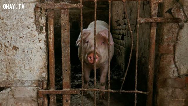 3. Hàng tỉ động vật sẽ được giải phóng khỏi cuộc đời khốn khổ,ngừng ăn thịt,ăn chay,chuyện gì sẽ xảy ra nếu
