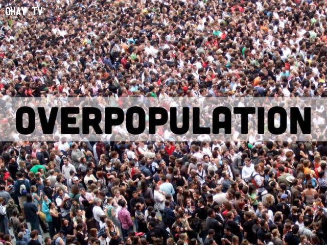2. Sẽ có nhiều đất để sống hơn cho lượng dân số thế giới hiện nay. ,ngừng ăn thịt,ăn chay,chuyện gì sẽ xảy ra nếu