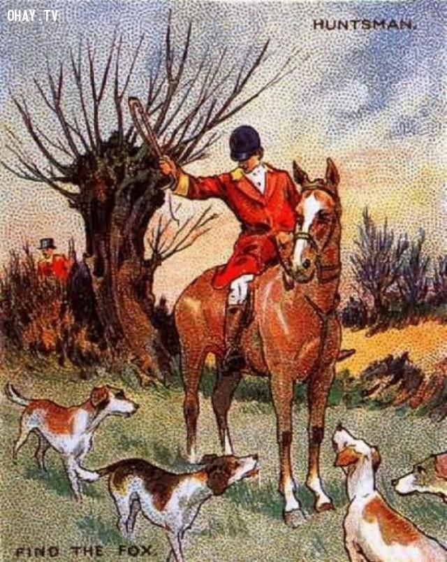 4. Một người thợ săn đã lạc mất một chú cáo,thử tài tinh mắt