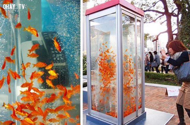 20. Bốt điện thoại này được xây dựng như một bể cá tham quan ở Kyoto.,phát minh hữu ích,người nhật bản