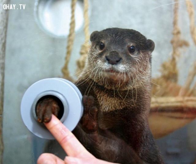 5. Sở thú ở đây là nơi bạn có thể bắt tay với một con rái cá thông qua một cái lỗ nhỏ. ,phát minh hữu ích,người nhật bản