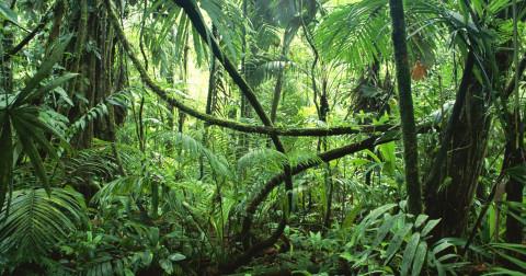 Kỹ năng tìm đường khi thất lạc trong rừng