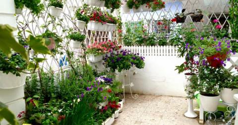 Cách để bạn tự tạo cho mình một vườn hoa nho nhỏ đủ sắc màu