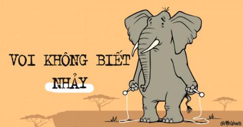 10 sự thật thú vị về loài voi có thể bạn chưa biết