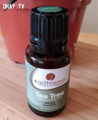 5. Tinh dầu cây trà,chất tẩy rửa,mẹo nhà bếp