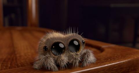 Chú nhện Lucas siêu dễ thương đốn tim toàn thế giới