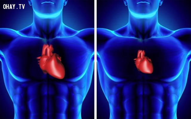6. Trái tim bạn sẽ bị thu nhỏ lại,khám phá vũ trụ,cơ thể con người,thiên văn học