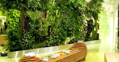 Top 10 loại cây đẹp thường sử dụng cho vườn trên tường