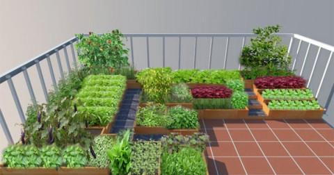 10 loại rau củ dễ trồng tại nhà cho người mới bắt đầu
