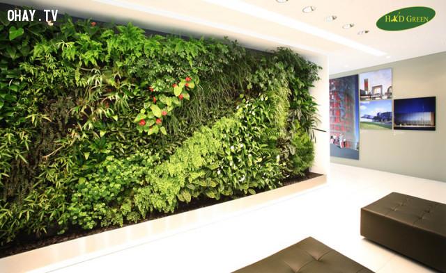 1. Lý do nên chọn vườn thẳng đứng hay tường xanh trong thiết kế nội ngoại thất,vườn cây treo tường,vườn thẳng đứng