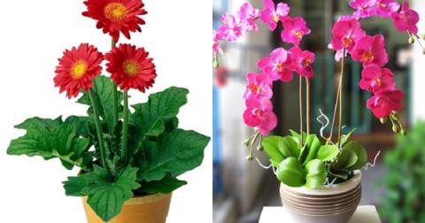6 loại hoa đem lại may mắn cho gia chủ trong những ngày Tết