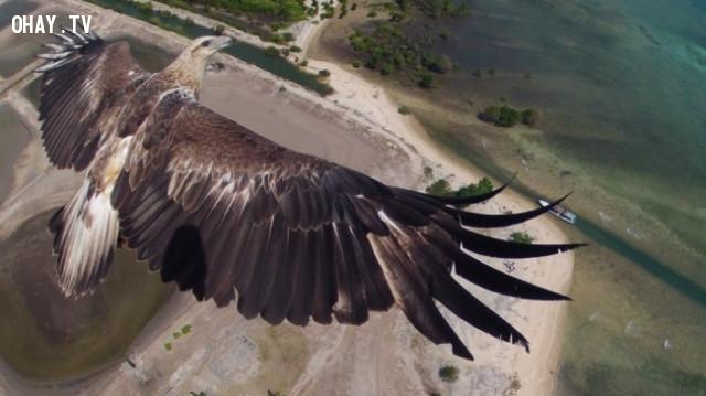 4. ,nhiếp ảnh,ảnh chụp từ trên cao